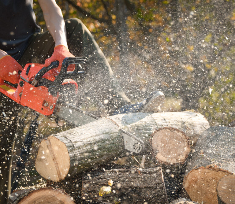 The 10 Best Chainsaws to Buy 2021