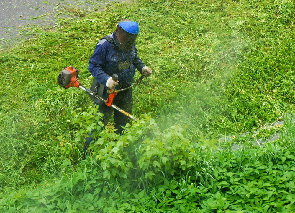 string trimmer cutting thick grass