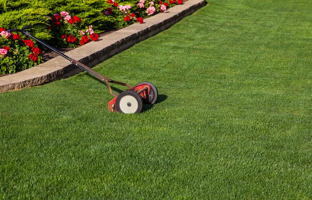 reel mower on lawn