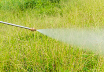 The Best Weed Killers for Lawns: Keep Out Unwanted Plants