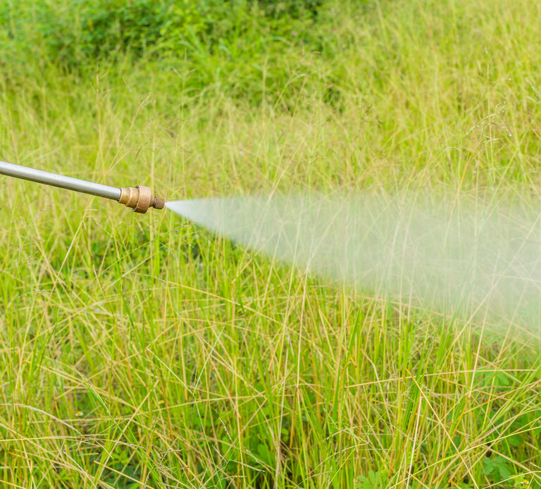 The 10 Best Weed Killers for Lawns 2021