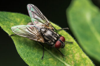 Getting Rid of Flies Outside – How to Evict These Pesky Insects