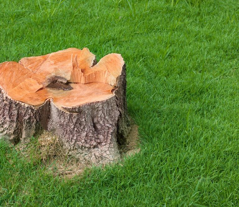 Five Ways to Kill a Tree Stump