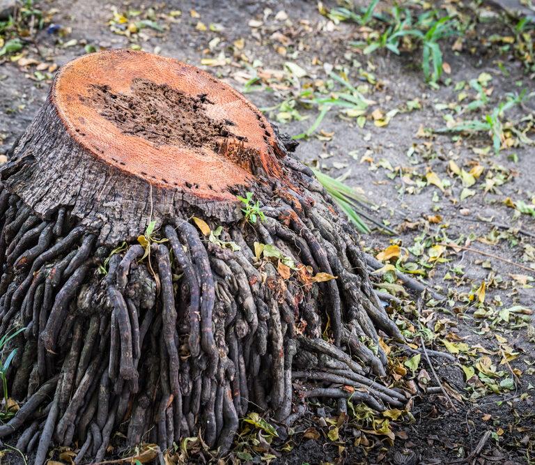 5 Effective Ways to Kill Tree Roots