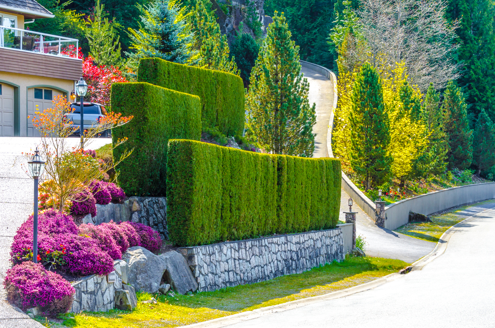bright and colorful geometric hedge row