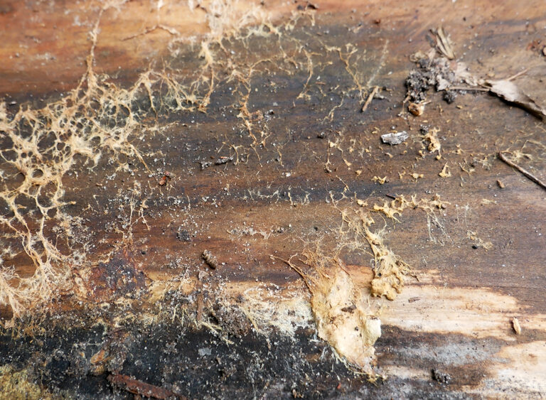 How to Kill Mold on Wood – Rapid Removal and Prevention Tips