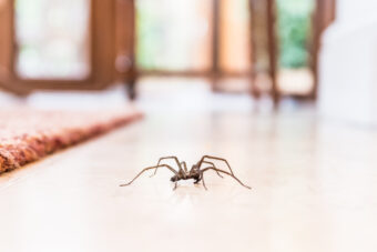 How to Get Rid of Spiders – 7 Proven Strategies for Keeping Arachnids at Bay