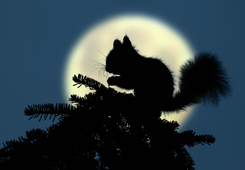 squirrel silhouetted against moon