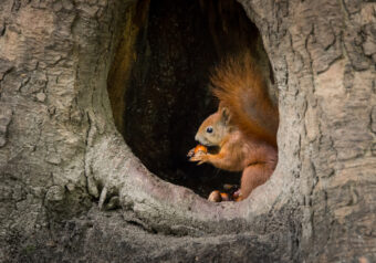 5 Ways to Get Rid of Squirrels: How-to Eviction Guide