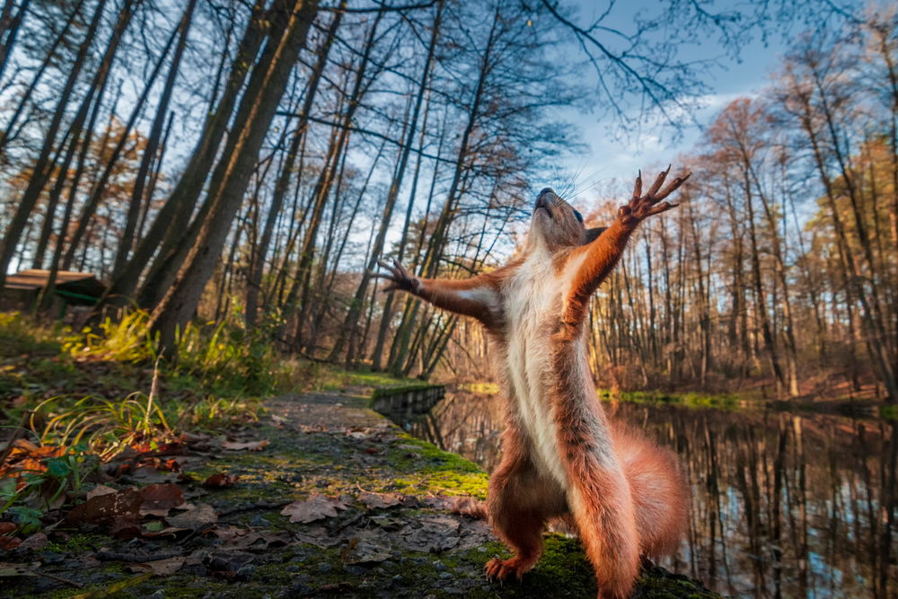 squirrel standing with arms raised