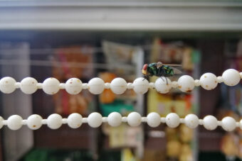 Getting Rid of Flies Inside: How to Keep the Pests Out of Your Home