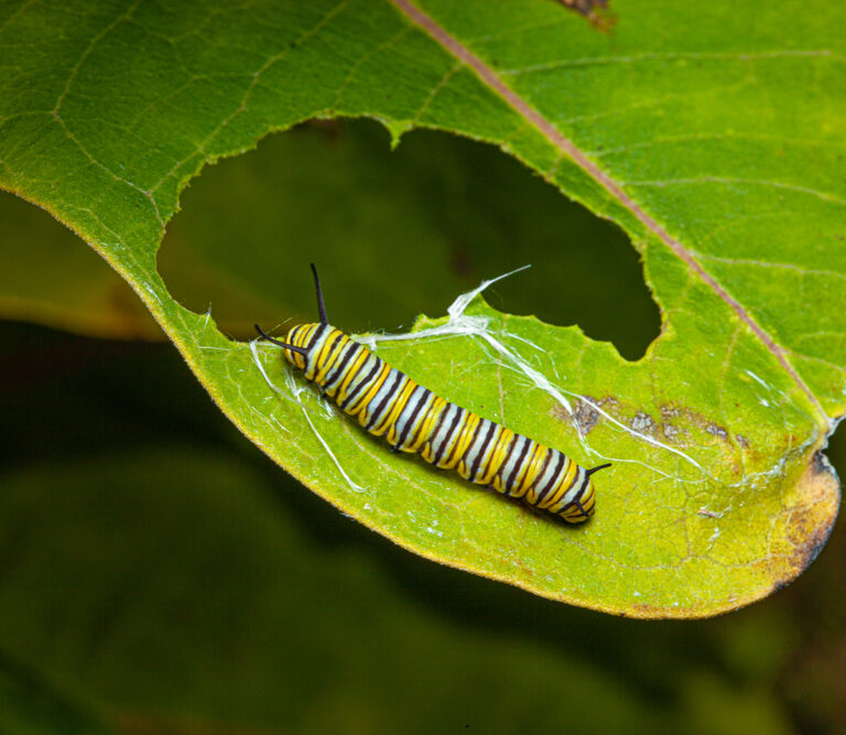 How to Get Rid of Caterpillars – Without Making Your Skin Crawl
