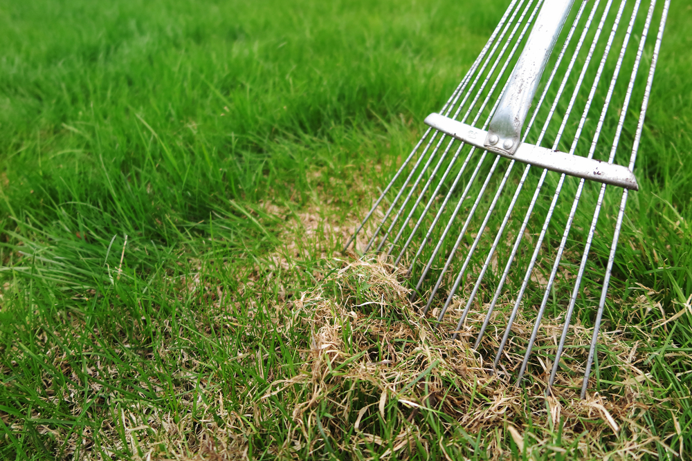 a lawn rake being used to dethatch a lawn