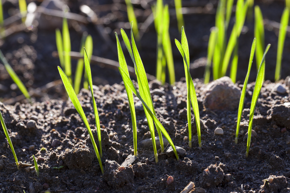 How Long Does It Take for Grass Seed to Grow - Tool Digest