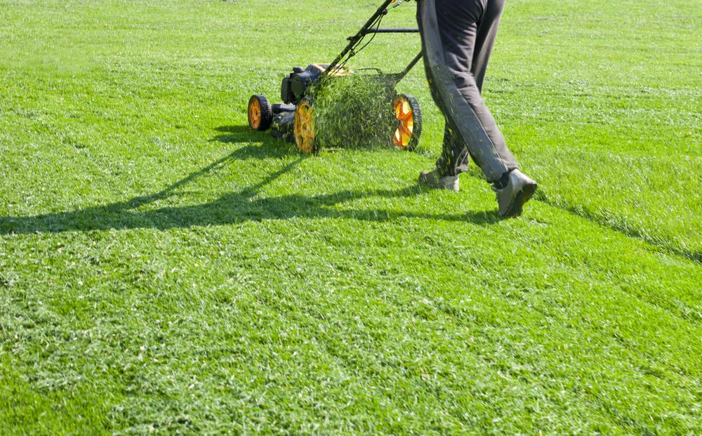 A lawn mower mulching grass