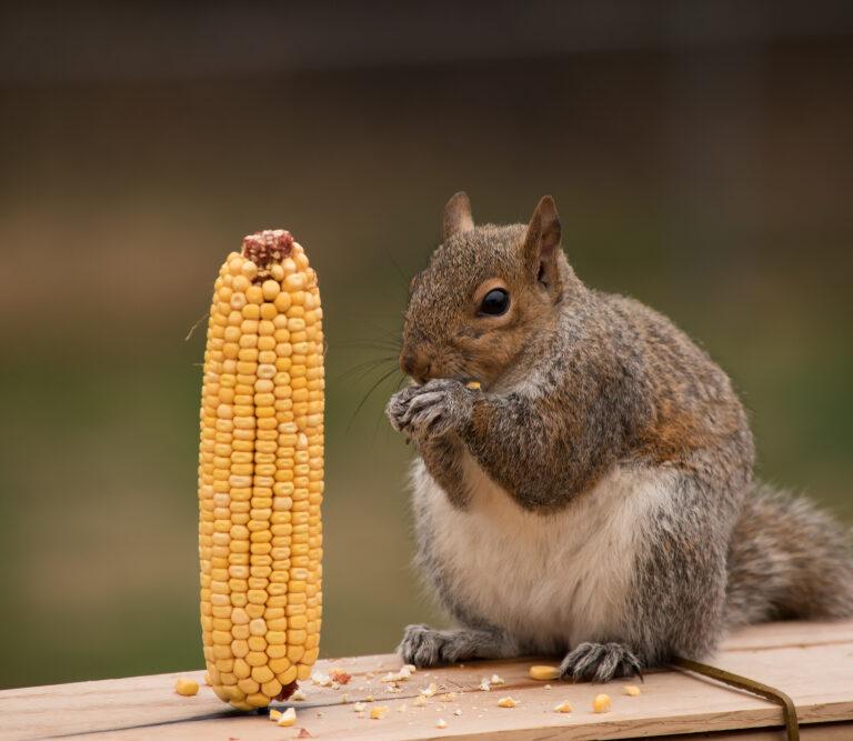 Go Nuts With These DIY Squirrel Feeder Ideas