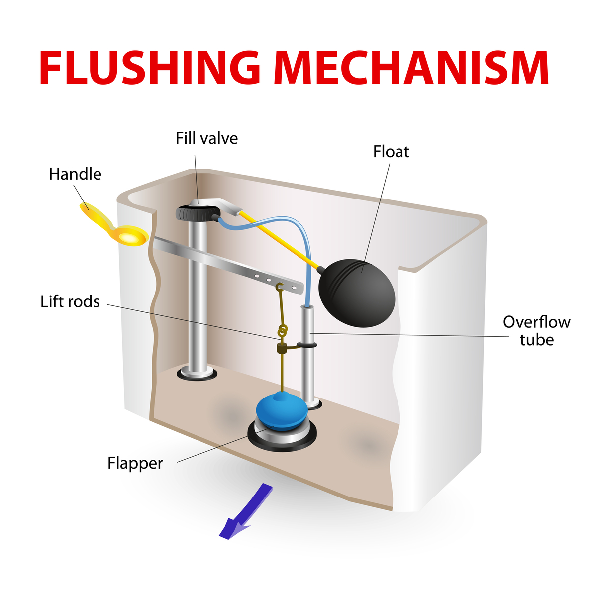 Labeled parts of the flushing mechanism in a standard toilet.