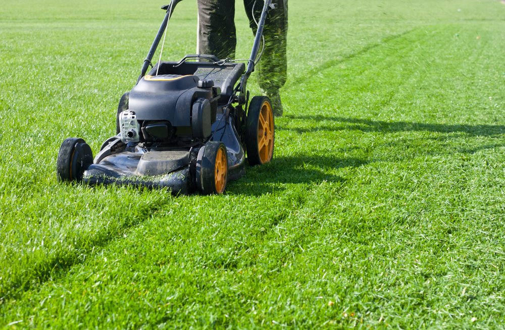 a lawnmower trimming neat rows
