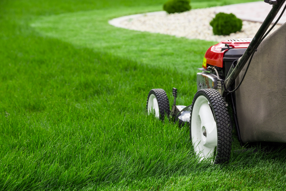 lawnmower mowing tall grass