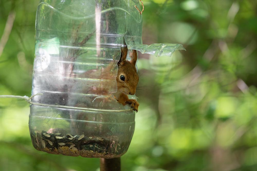 squirrel sits inside recycled jug feeder