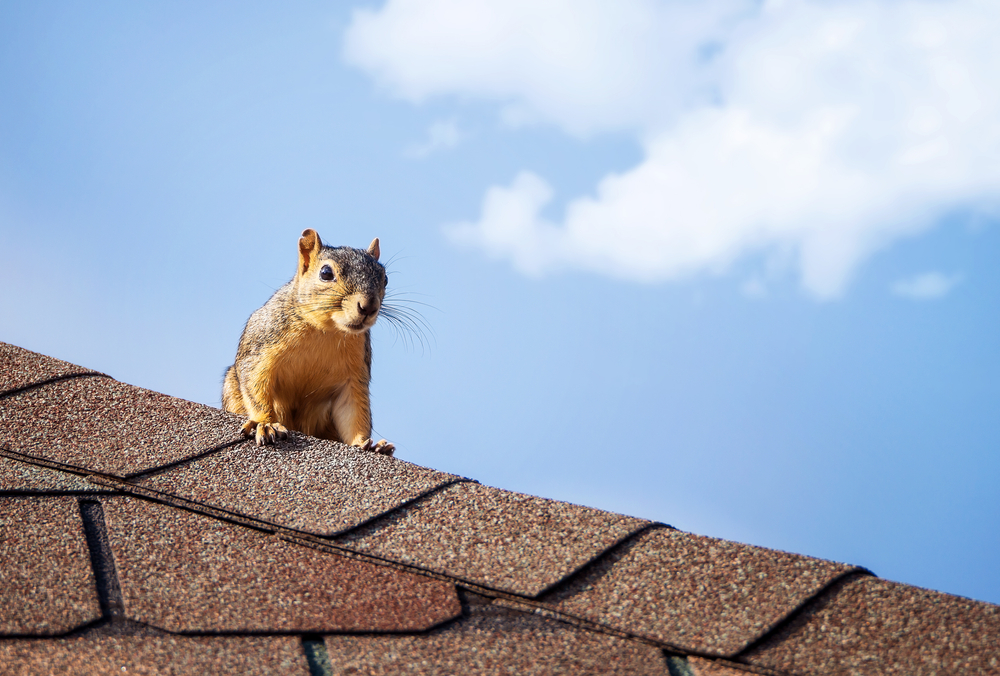 a squirrel stands on top of a roof in front of a blue sky